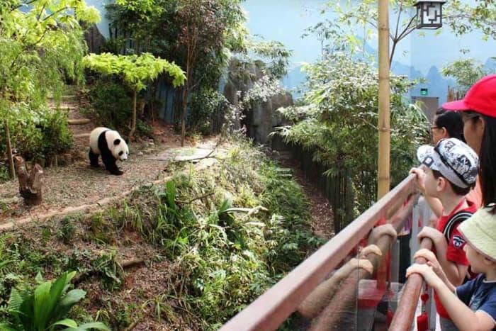 Khu vực sinh sống của những chú gấu trúc bên trong River Safari