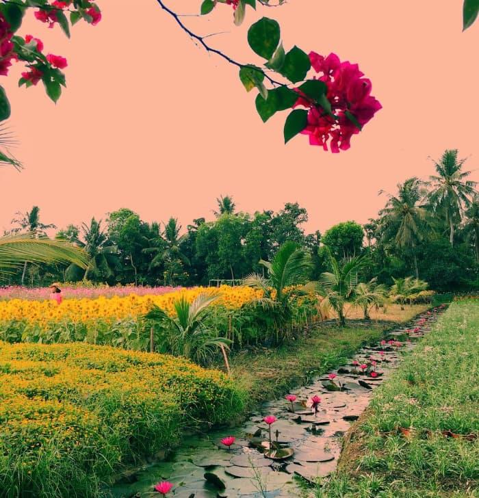 Địa điểm du lịch Tiền Giang - Vườn hoa Mãn Đình Hồng