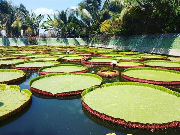 Chùa Lá Sen Đồng Tháp - Địa điểm du lịch Đồng Tháp thường xuất hiện trong các tour du lịch
