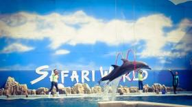 Thái Lan (Bangkok - Pattaya) 5 ngày 4 đêm giá rẻ: Safari World