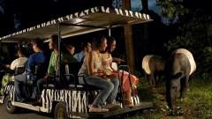 Vé tham quan Safari Night ở Singapore