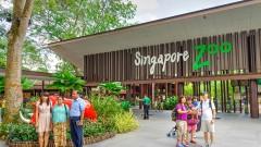 Vé tham quan vườn thú Singapore Zoo